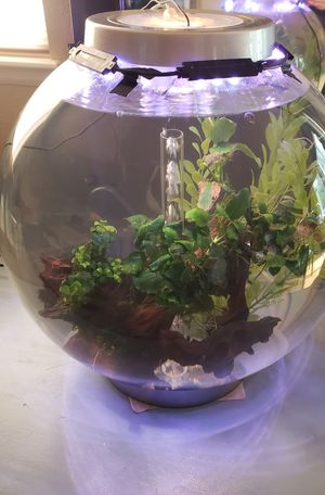 16 gallon fish tank for Sale in Erie, CO