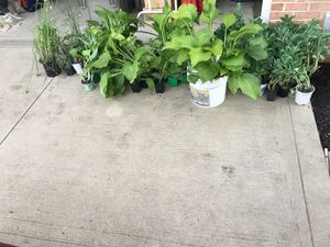 Plants for Sale in Berea, OH