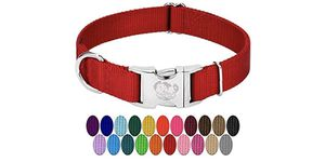 Dog collar for Sale in Charlotte, NC