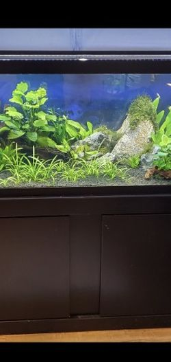 75g Planted Tank W/ Stand for Sale in Los Angeles,  CA