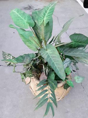 Fake plant for Sale in La Mesa, CA