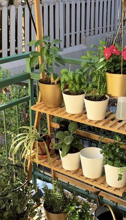 Bamboo 3-Tier Plant Stand for Sale in West Hollywood,  CA
