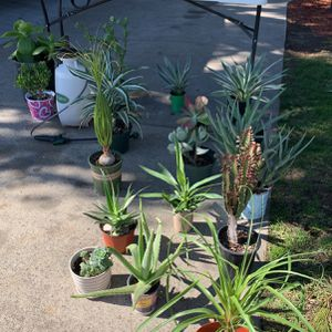 Plants For Sale Today for Sale in Santa Ana, CA