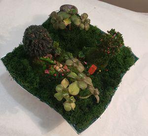 Forest Greenery Terrarium for Sale in Oak Park, MI
