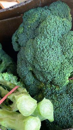Fresh Broccoli for Sale in Costa Mesa,  CA
