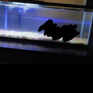 5655 Fish Tank / Newww The Scribbled Part Is my Son Lol He Was On The Table for Sale in Apopka, FL