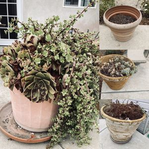 Large plant pots for Sale in Rancho Cucamonga, CA