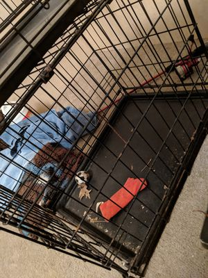 Dog crate for Sale in Florence, KY