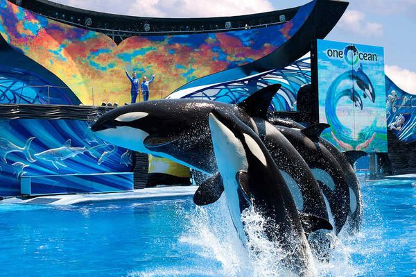 SeaWorld tickets (dining available)
