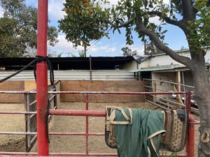 horse stall panels for Sale in Whittier, CA