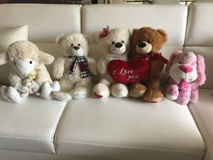 Teddy for Sale in FL, US