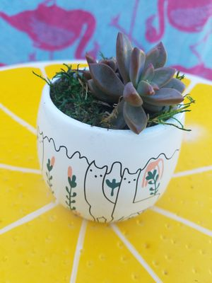 Small Live Succulents for Sale in DeLand, FL