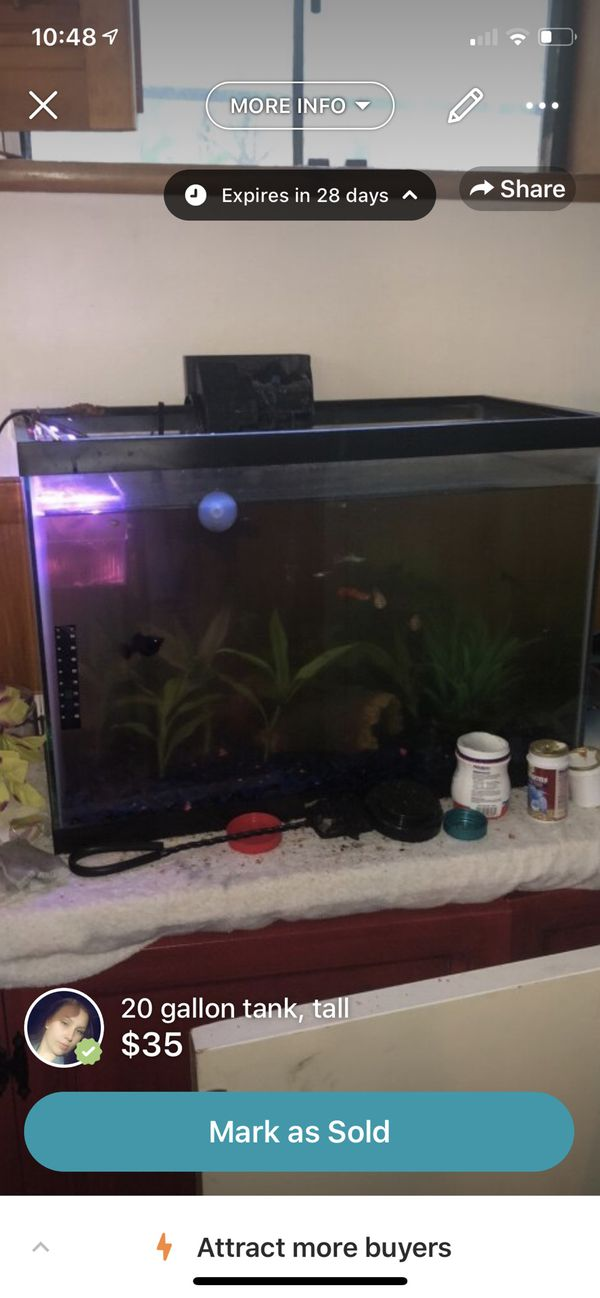 20 gallon tank, tall