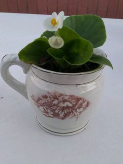 Decorative Potted Plant. $15 for Sale in Buena Park,  CA