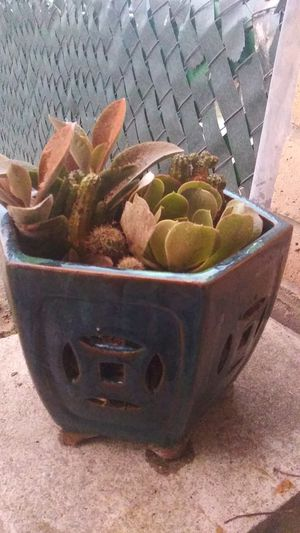 Ceramic blue succulent mix for Sale in Sanger, CA