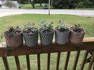 Succulent arrangements/ fall clearance for Sale in York, PA