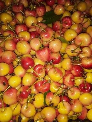 Fresh Rainier Cherry from today 18 lbs for Sale in Stockton, CA