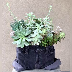 JAM Succulents for Sale in Los Alamitos, CA