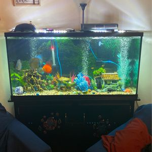 60 Gallon Tank 2 Months Used for Sale in Long Beach, CA