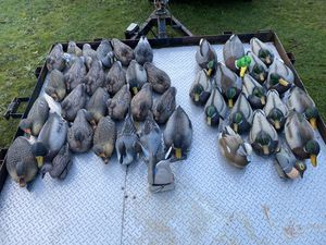 12' flat bottom aluminum boat with duck decoys and weights for Sale in Lynnwood, WA