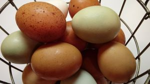 Fresh, Organic, Free Range Eggs for Sale in El Cajon, CA