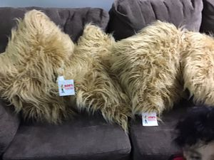 CouchPillow for Sale in Waterbury, CT