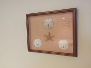 "Custom framed shadow box item ""Sand dollars& Starfish"" for Sale in Peoria, IL"