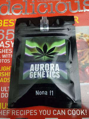 Nona [SF.Sourdough x SourTangie] Aurora Genetics for Sale in Fairfield, CA