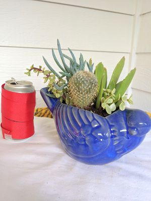 Succulent Cactus Plants in Bird Ceramic Planter Pot- Real Indoor House Plant for Sale in Auburn, WA