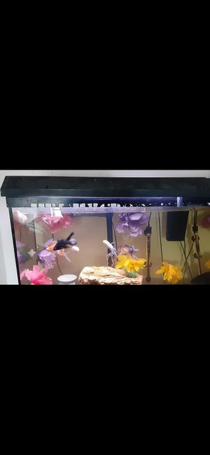 Light for 29 G tank for Sale in Lewisville, TX