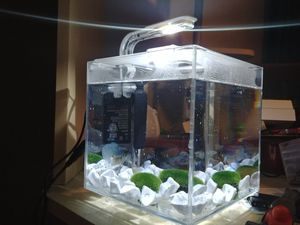 Desk glass fish tank. Heater. Decor. & lighting. for Sale in Orland Hills, IL