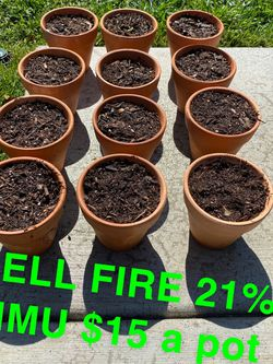Weed Plants for Sale in Covina,  CA