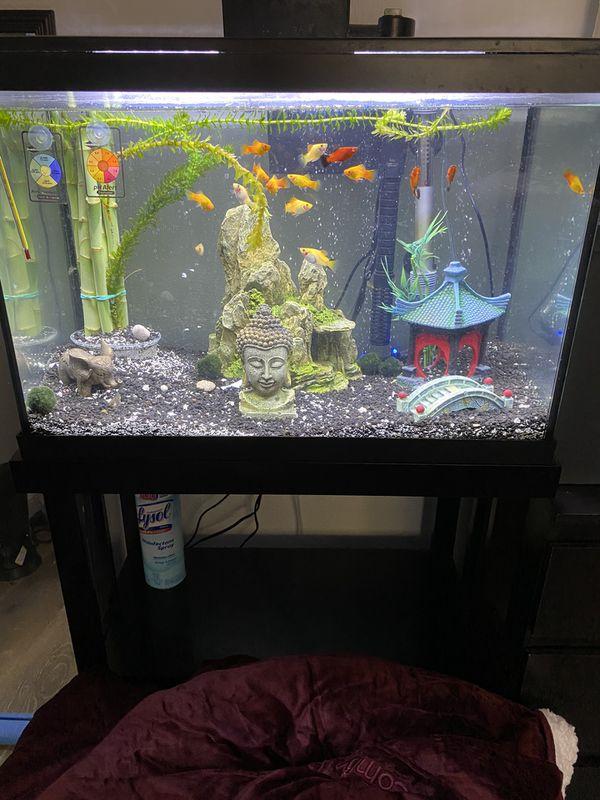 Combo fish tank-stand- fish- tools
