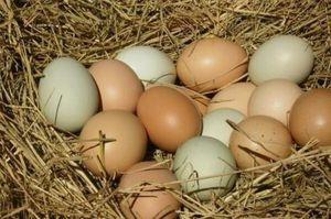 Farm Fresh - Free Range Eggs for Sale in Kirkland, WA