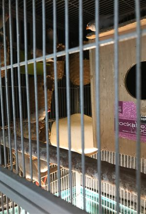 Bird cage and 18 or 19 Black & White Spotted Zebra Finches for Sale in Port Richey, FL