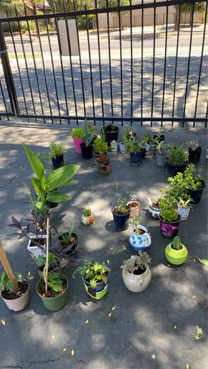 Plants, variety of succulents flowers aloe Vera for Sale in Fresno, CA