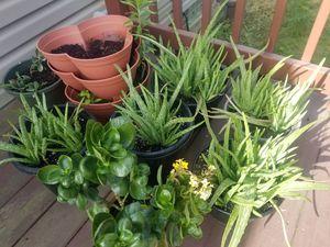 Aloe vera in a pot for Sale in Parma, OH