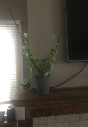 Ivy variegated for Sale in Jackson, MI