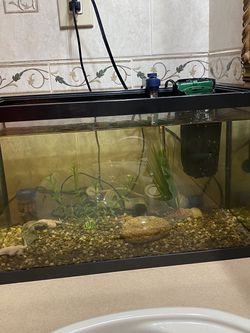 10 gallon fish tank with filter, heater and decor for Sale in Brooklyn,  NY