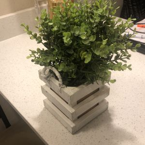 Fake Plant for Sale in Parker, CO
