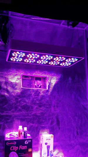 KIND LED 600 VEG for Sale in Tarpon Springs, FL