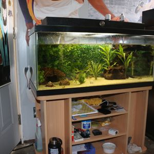 Fish Tank + Stand And Light for Sale in Santa Ana, CA