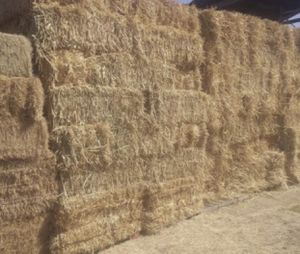 Hay do you need HAY? ITS NOT TOO LATE!!!!! for Sale in Ontario, CA