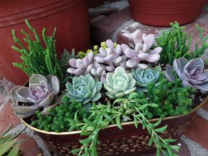 """10"""" pot with succulent plants for Sale in Whittier, CA"""
