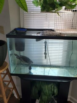 40 Gallon Fish Tank for Sale in Indianapolis,  IN