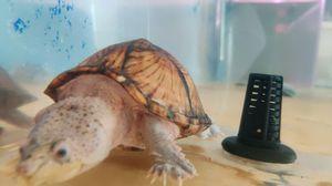 turtles for Sale in Santa Ana, CA