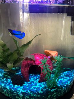 Fish Tank & Supplies for Sale in Felton,  CA