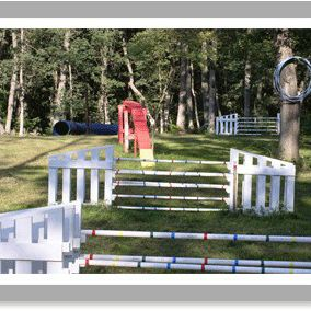 Dog Agility Equipment for Sale in Neshkoro, WI