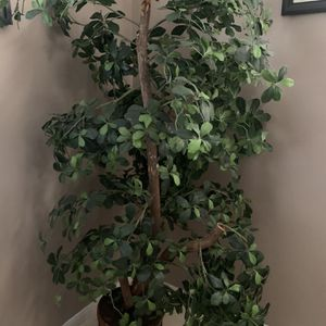 Large Plant for Sale in Whittier, CA