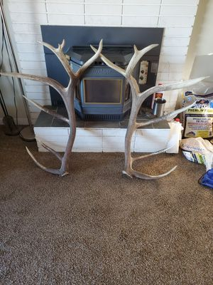 SHEDS (ELK NAMED LONG TINE) for Sale in Kennewick, WA